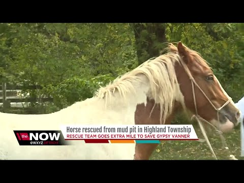 Horse sinking in mud saved by metro Detroit first responders