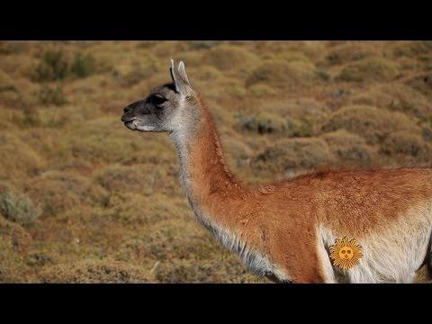 Nature: Torres Del Paine National Park, Patagonia
