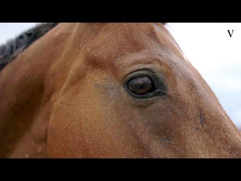 Что не так с прокатом лошадей?