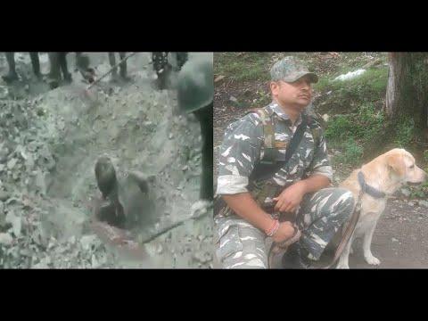Man trapped under landslide debris rescued after CRPF dog alerts personnel