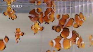 Zobacz największą farmę ryb akwariowych w Stanach [Specjaliści od megaakwariów]