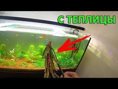 С теплички в аквариум. Когда будут вьюны и природа