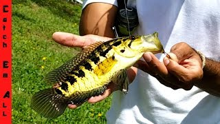 CATCH AMAZING EXOTIC FISH with NO BAIT!