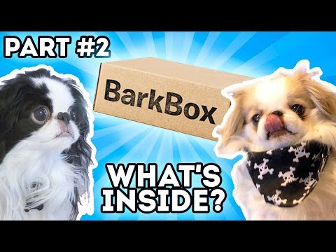 Barkbox - Our Second Month's Box, the Japanese Chins Help Part #2