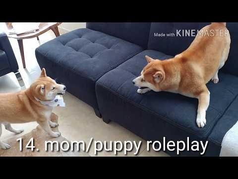 Every Shiba Play Move in 2 minutes! ( 私たちは遊ぶのが大好き !)