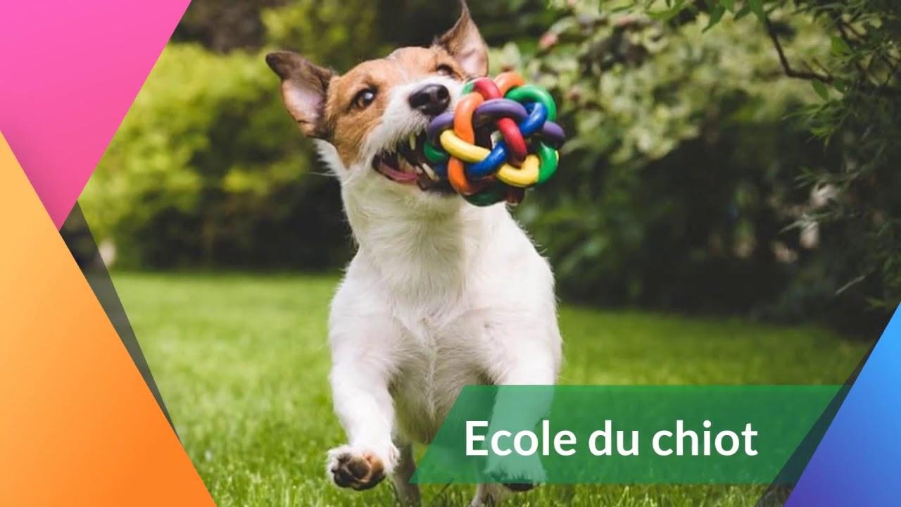 dressage chien indre