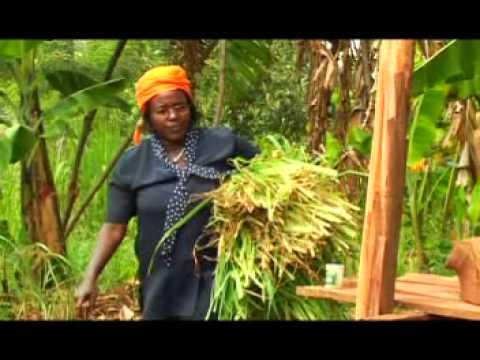 M-PESA documentary