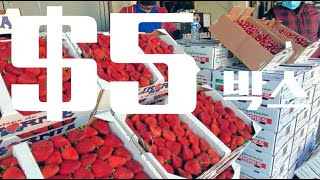 충격적인 미국 엘에이 과일 가격!!! 한국 이랑 비교해…