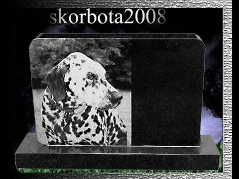 Памятник собаке, памятник животному,памятник другу.