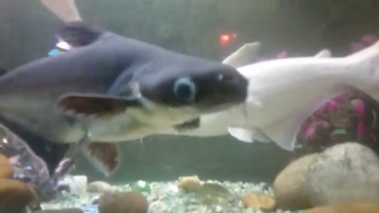 Different Types Of Aquarium Fishes Youtube