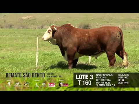 LOTE 03 T 160