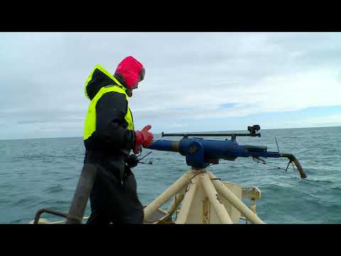 The War on Whaling - Trailer
