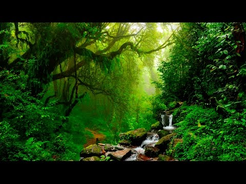 Relaxing Music - Flute, Gentle Birds and Rainforest Sound