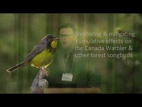 Canada Warbler Response to... on Recovering Energy Sector Disturbances (Erin Bayne)