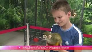 В Саранск впервые приехала контактная выставка обезьян