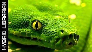 World's 10 Most Dangerous Snakes (with SnakeBytesTV)
