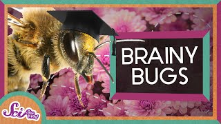 Bugs Arent Brainless! | Storytime: Charles Henry Turner