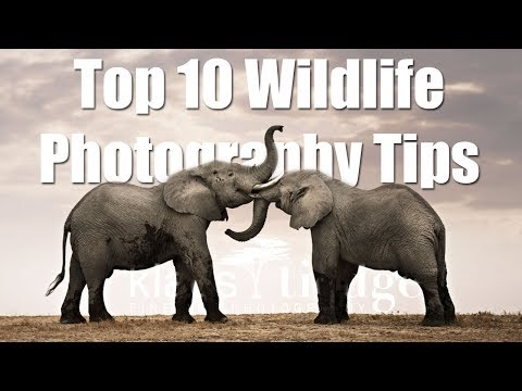 Top 10 Wildlife Photography Tips
