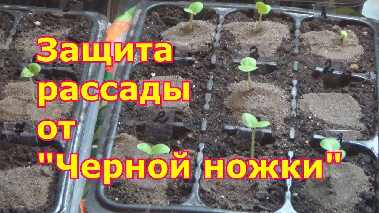 Посадка ели - как правильно посадить ель - YouTube