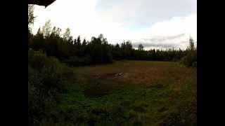 Охота на кабана с лабаза видео