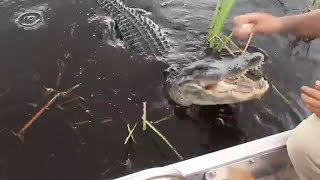 Miccosukee Tribe Alligator Handler (Everglades Airboat Tour)