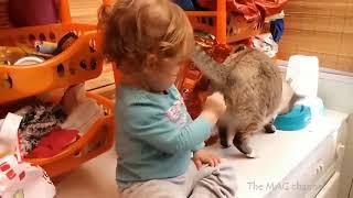 1 Супер кот Смешное видео про котов