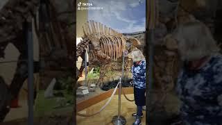 Смотреть видео 2020 01 04 204547870 Краеведческий музей города Азова. Ростовская область. Россия. Путешествия. онлайн