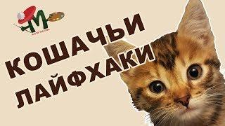 #лайфхаки для кошек, котят, котов и котиков