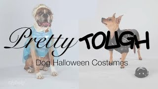 Funny Halloween Costumes For Big And Small Dogs