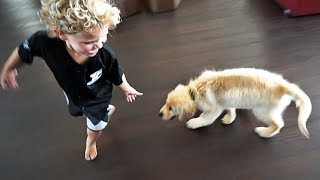 Mini Jake Paul Gets A PUPPY!!