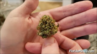 Bubba Kush 17.19% THC Whole Flower by GrowHealthy - Florida Medical Marijuana - SAVE THE USPS!