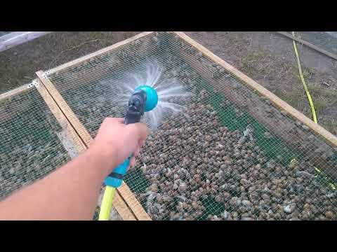 Helix Aspersa Muller - равликова ферма (миття равлика)