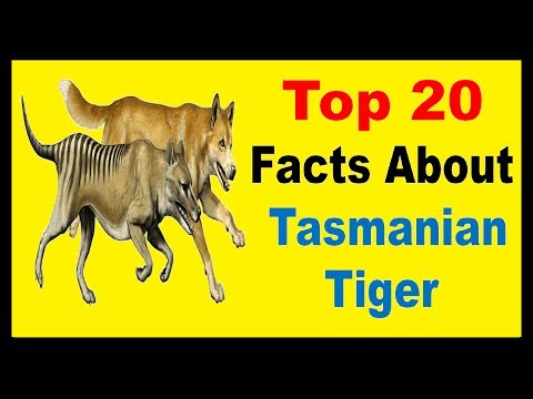 Tasmanian Tiger - Facts