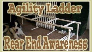 Shape Fest 2012, Clicker Agility Dog Training - Rear End Awareness