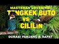 Suara Tengkek Buto Dan Cililin Untuk Masteran Lovebird Ngriwik(.mp3 .mp4) Mp3 - Mp4 Download