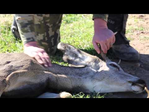 Auto Collision Injured Deer Suffers