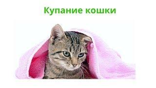 Купание кошек. Ветеринарная клиника Био-Вет.