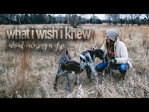 What I Wish I Knew About Owning A GSP