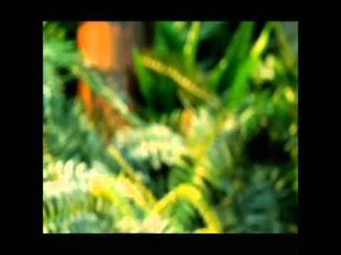 Fett's Vette remix music video