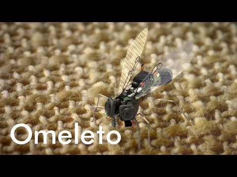 A young genius creates an insect-sized drone to spy on his ex-girlfriend. | Flyspy