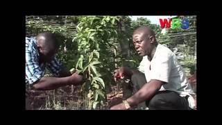 SMART FARMING PASSION FRUIT GROWING