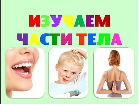 Изучаем части тела. Развивающее видео для малышей