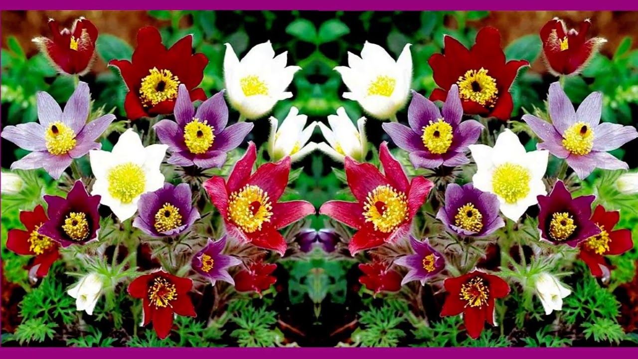 Сон сажать цветы