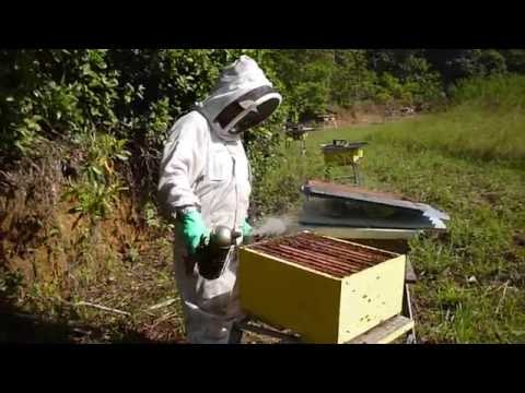 apiculteur guyane
