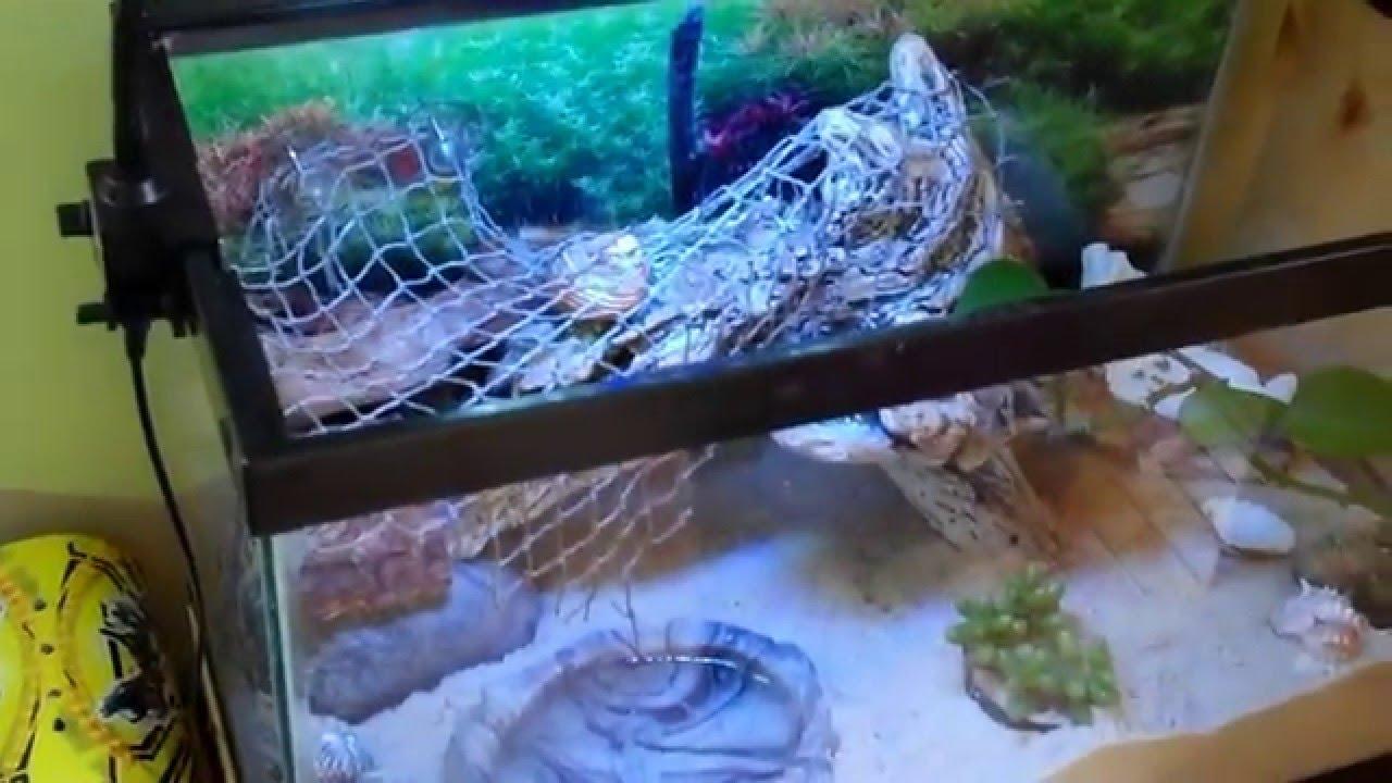 Hermit Crabs 10 Gallon Terrarium Habitat Aquarium Set Up Part 1 Of