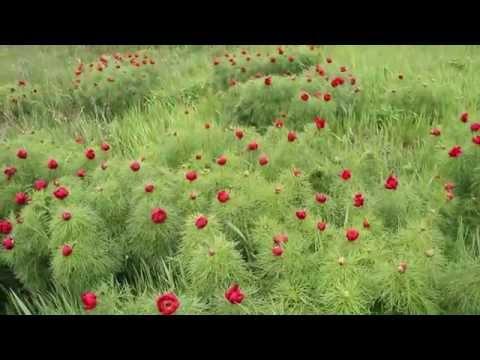 Какие растения лучше всего высаживать вокруг ели, чтобы