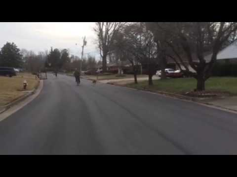 Toro the Boxer Dog goes for his daily jog !!!