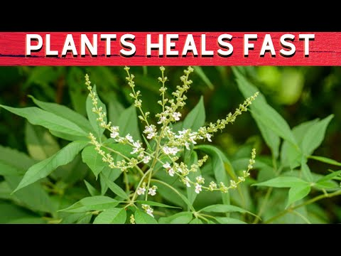 10 HERBS & PLANTS THAT HEALS FAST - Philippines Travel Site|FULL HD