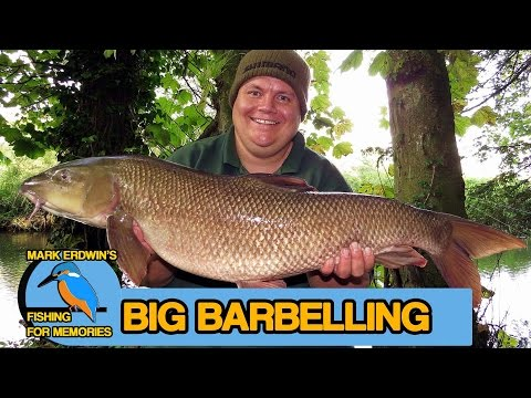 Barbel Fishing - Link Legering For Specimen Barbel (Video 70)