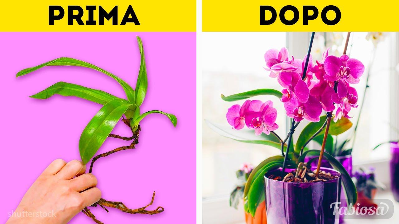 Download Cura delle orchidee: tutto quello che devi sapere per coltivare le orchidee | Trucchetti